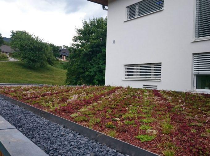 Flachdach mit Kieseln und Pflanzen